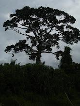Photo: Old tree