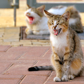 At comedy club by Natalie Ax - Animals - Cats Portraits ( outdoors, street, cat, portrait, funny, pet, laughing )