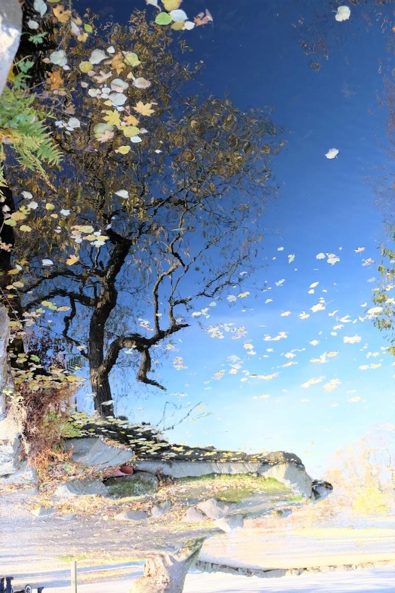 Lago D'autunno di Francesco_1987