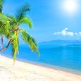 Beach Live Wallpaper HD 🏖️ Tropical Backgrounds