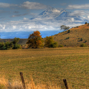 Mt Shasta rising in the fog by Susan Hanson - Landscapes Mountains & Hills (  )