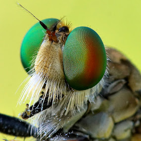 by Sam Moshavi - Animals Insects & Spiders