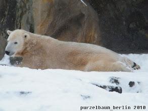 Photo: Macht Knut es sich an anderer Stelle ebenfalls gemuetlich ;-)