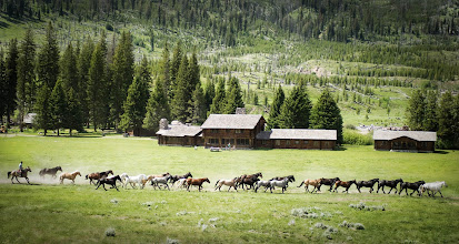 Photo: Every morning the horses run out across the fields... and every evening they run back in towards the stables...