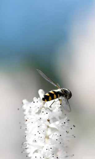 LWP 蜂