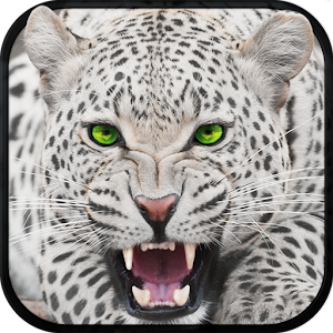 Wild Snow Leopard Survival Sim for PC and MAC