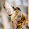 6670 jpg Bird Nov 7-18-16.jpg