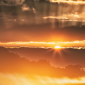 My double love by Anne-Cecile Pflieger - Landscapes Sunsets & Sunrises ( clouds, orange, skyline, sun, rays, annececilegraphic, sky, tree, sunset, cloud, trees, brown, light,  )
