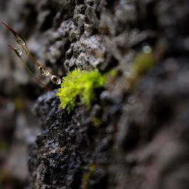 Beauty of nature. by Alireza Zahiri sorouri - Nature Up Close Natural Waterdrops ( love, macro, drops, green, nature, macro photography, nice )