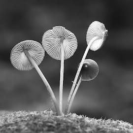 Antennes paraboliques by Gérard CHATENET - Black & White Flowers & Plants