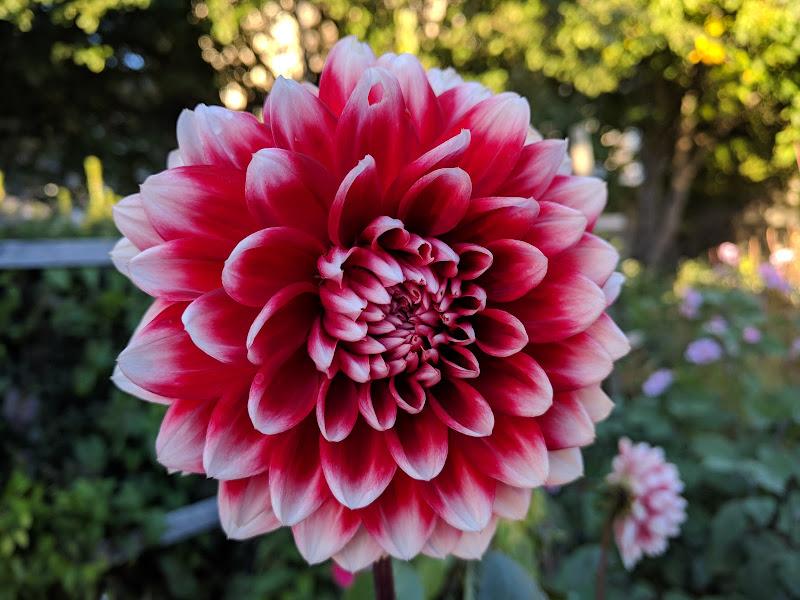 La magia in un fiore di Silvia90