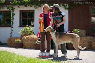 Zdjęcie: Zwyc Klubu Pies BOB - ONUFRY ZAGŁOBA Celerrimus