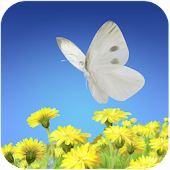Flying Butterfly-LiveWallpaper