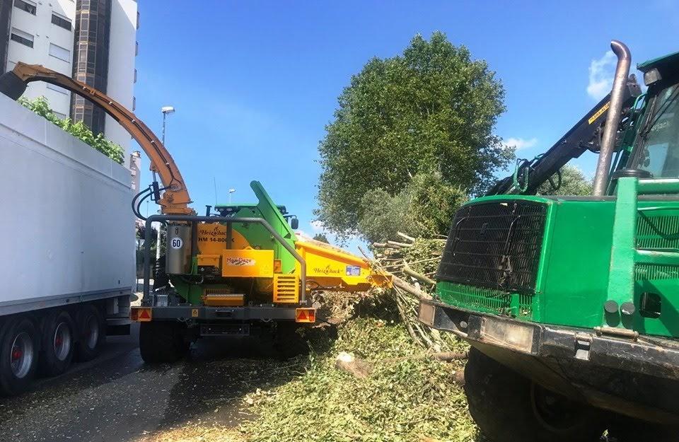 Câmara de Lamego abateu árvores como medida preventiva