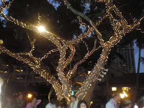 Photo: lit up tree @ the Ovid party