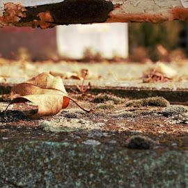in the fall by Miroslav Bičanić - Uncategorized All Uncategorized ( walkaway, fall, promenade, autumn leaves, autumn )