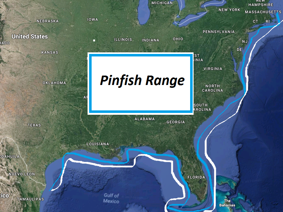 How To: Pinfish - Everything You Need To Know