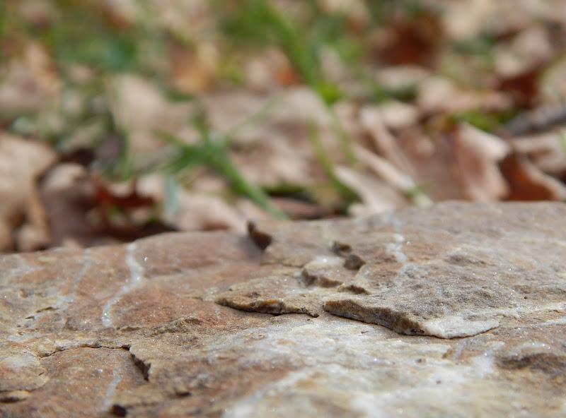 Roccia... di peppenyc