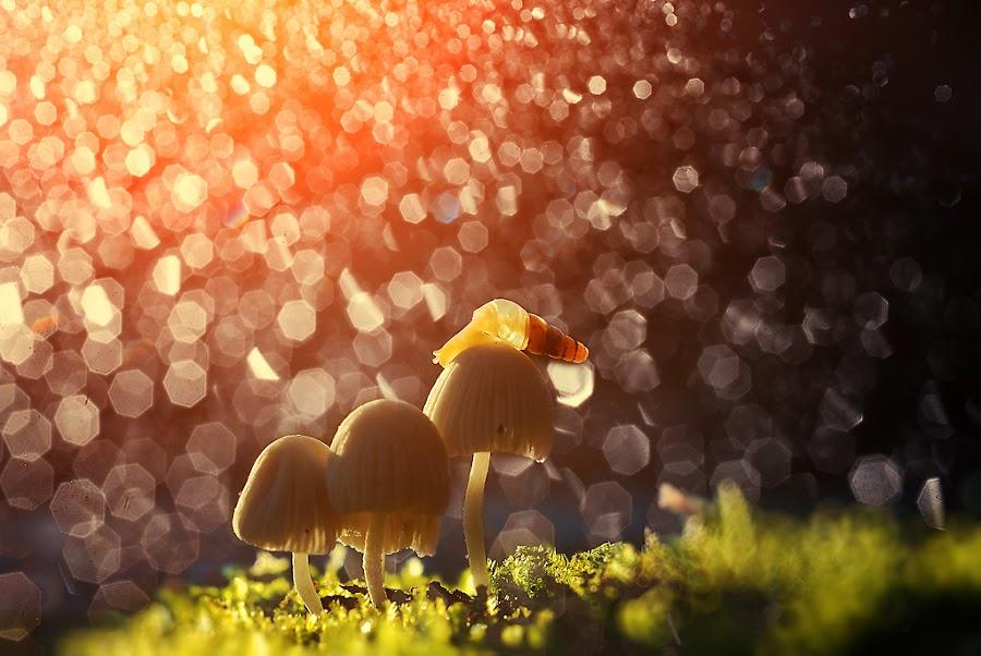 by Agust Syahrivana - Animals Other