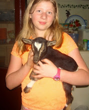 Photo: Our neighbor's goat had twins. The kids named them Mambo (after the Cameroon chocolate bar) and Oreo.