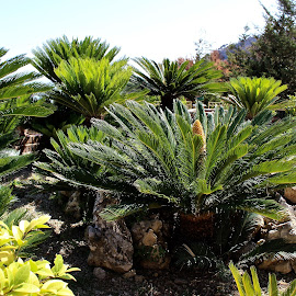 Tropical plants. by Peter DiMarco - Nature Up Close Trees & Bushes ( nature, bushes, tropical plants, trees, nature up close )