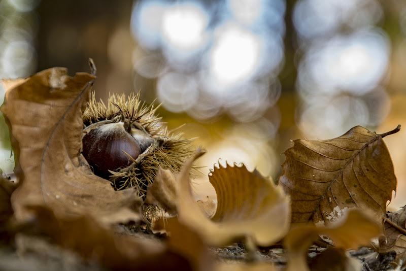 Tempo di castagne! di Nefthi_M
