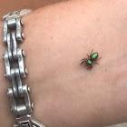 Help me ID this species