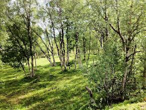 Photo: Havumetsävyöhykkeiden pohjoispuolella oli koivuja - ja lopulta Pohjois-Norjassa ei enää lainkaan puita