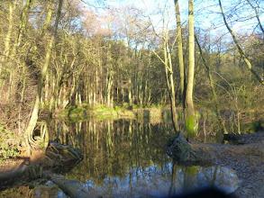 Photo: Woodland pond
