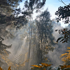 by Hendy Leonardo - Landscapes Forests ( pwcsunbeams )