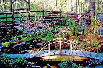 Photo: The home were I grew up. This delicate bridge leads over a pond to the front door.