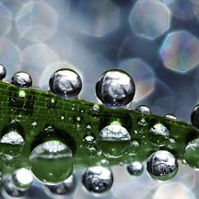 Rollin' by Ahmad Soedarmawan - Nature Up Close Water