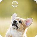 Cute Corgi Wallpapers – HD Backgrounds icon