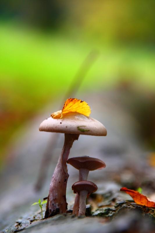 Vita di bosco di lorespo