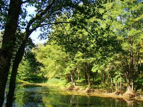 Photo: Елена Ветушенко,«Старый пруд», глянцевая фотобумага, разм. 21 х 30 см
