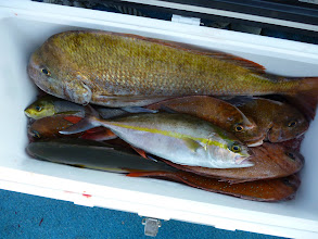 Photo: オオツさんの釣果!デカ真鯛が光ってます!