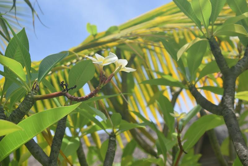 "Natura ""mauritiana"" di federica_fagotto"