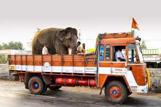 Photo: On the way to Hampi, I got to capture a temple elephant being transported. The mahout said it was being ferried back to Chitradurga from Bangalore, where it was part of some festivities.