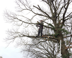 paul jackson cutting down a tree in devon