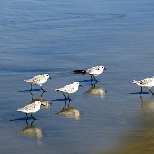 waterbirds-1.jpg