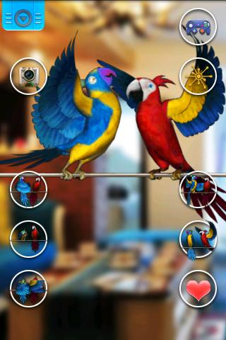 Talking Parrot Couple Free screenshots 3