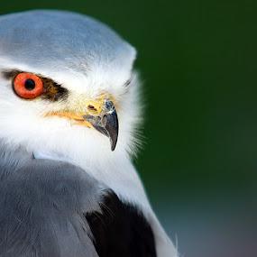 Hello! by Elmer van Zyl - Animals Birds