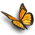 TLD Butterfly icon