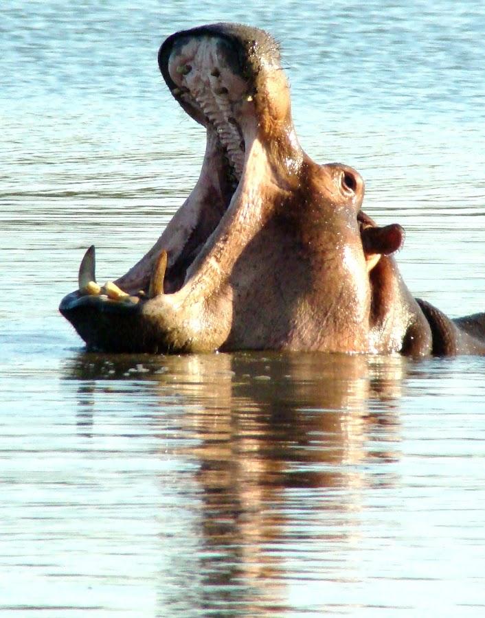 by Sazar De Bruin - Animals Other Mammals