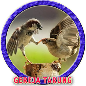 Burung Gereja Tarung Gacor 1 0 0 Android Apk Free Download Apkturbo
