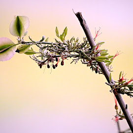 Twig by Pieter J de Villiers - Nature Up Close Other plants