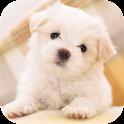 Cute Dog Licks Screen HD LWP icon