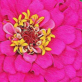 Pink and yellow by Rosemary Gamburg - Flowers Single Flower ( #singleblossom #nature #flower #pinkflower )