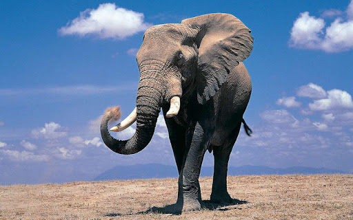 Elephant Wallpapers HD