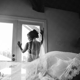 B&W Beauty by Kate Gansneder - Wedding Bride ( bride, dress, veil, wedding, black and white, monotone, train )